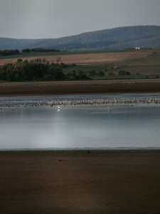 Thousands of birds rest at the reservoir