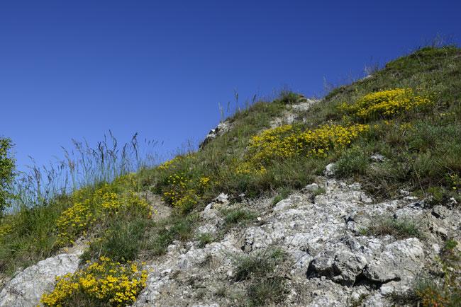 Dry grasslands